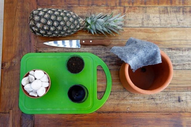 How To Grow Pineapple In Pots Niche Amp Nook