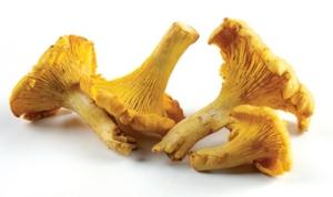 Mushroom Chanterelle