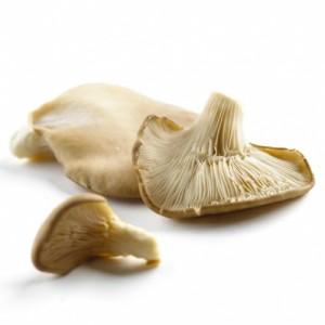 mushroom oyster