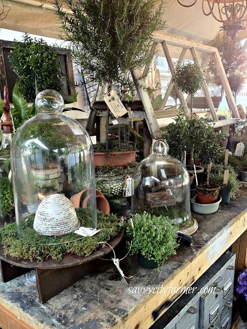 Cloches growing under glass niche nook for Garden cloche designs