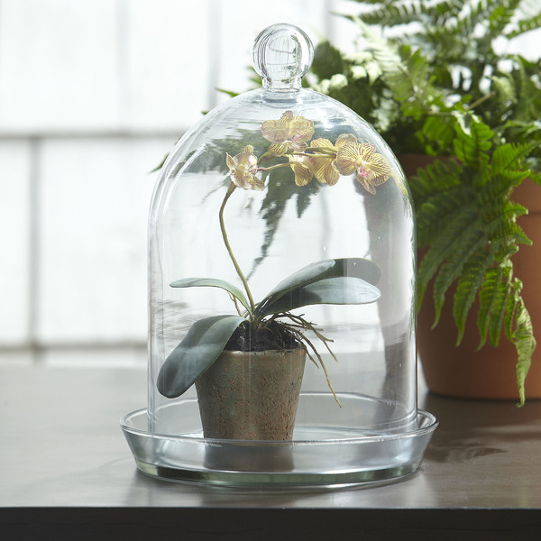 Bell+Jar+Round+Terrarium+I