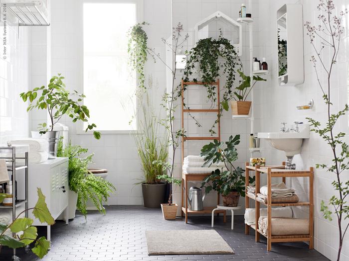 The Three Best Bathroom Plants | Niche & Nook