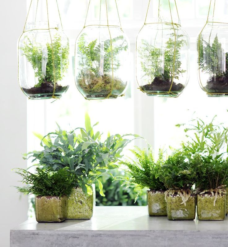 bathroom plants. Fern The Three Best Bathroom Plants  Niche Nook