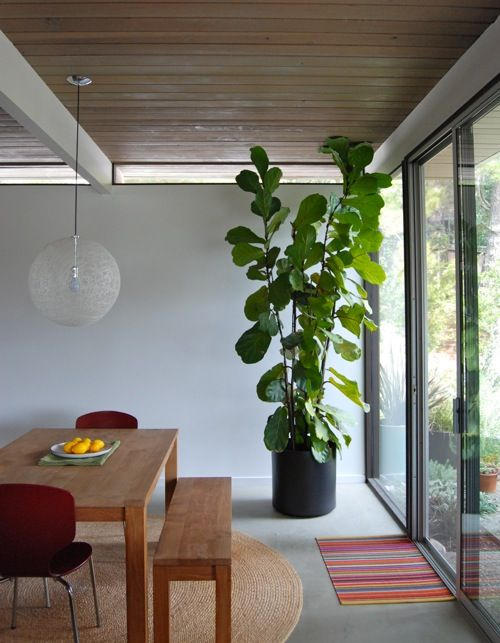 To bring back this warm, wonderful feeling, a solution is to fill the space  with a houseplant as substantial as a Christmas tree. - Bye Christmas Tree, Hello Houseplant Niche & Nook